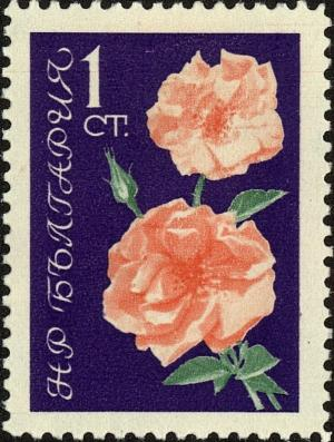 Colnect-4450-745-Pink-roses.jpg