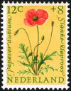 Colnect-2192-816-Long-headed-Poppy-Papaver-dubium.jpg
