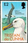 Colnect-1967-106-Atlantic-Yellow-nosed-Albatross-Diomedea-chlororhynchos-.jpg