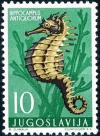 Colnect-4504-131-Short-snouted-Seahorse-Hippocampus-antiquorum.jpg