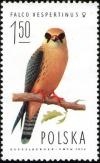 Colnect-1989-660-Red-footed-Falcon-Falco-vespertinus-Female.jpg