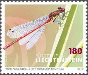 Colnect-5639-638-Large-Red-Damselfly-Pyrrhosoma-nymphula.jpg