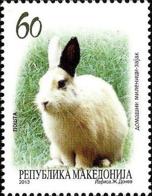 Colnect-2400-374-Domestic-Rabbit-Oryctolagus-cuniculus-domesticus.jpg