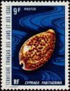 Colnect-792-325-Panther-Cowry-Cypraea-pantherina.jpg