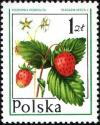 Colnect-1998-526-Wild-strawberry.jpg