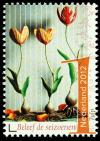 Colnect-1529-627-Tulip.jpg